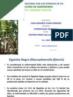 6c Sigatoka Negra 2016 - I (2)