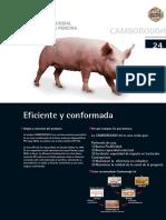 FichaC24 (1)