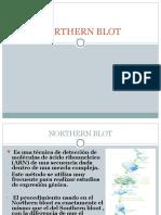 04 Northern Blot