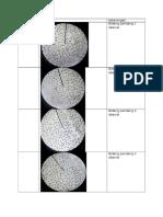 Tabel Pengamatan Ficus Elastica