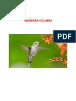 Pasărea Colibri