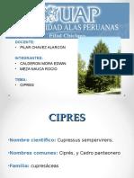 El Cipress
