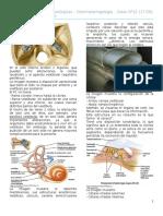 Clase 12 Patología Del Oído Interno
