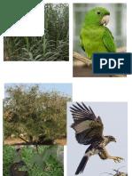 animales y plantas.docx