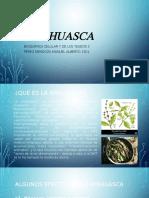 Ayahuasca DMT