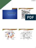BOT 1 PARED CELULAR -(modificado) (1).pdf