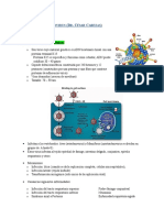 Adenovirus y Papovirus