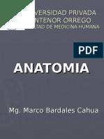antomia