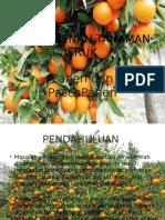ppt-pemanen-jeruk