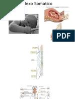 Plexo SOMATICO Concepto General Braquial y Lumbar (2)