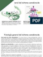 Fisiologia General Sistema Cannabinoide