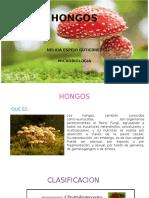 HONGOS NELIDA