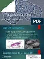CELULAS EPITELIALES