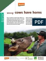 Por que vacas tem chifres?