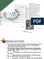 Presentación Para Alumnos Nucleo Celular