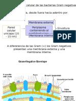 Envoltura Bacteriana B