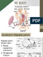 Anatomi Bayi