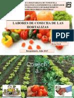 Labores de cosecha de frutas y hortalizas