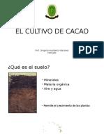 Deficiencias en Cacao (3)