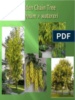 Tree Selection Level1_pp