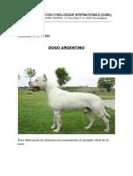 Dogo Argentino Catalogaciones Concurso