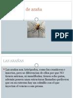 Picaduras de Araña