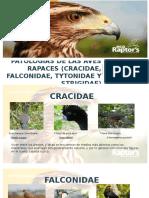 Patologias de Las Aves (Cracidae, Falconidae