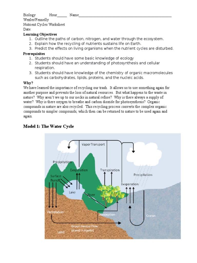 nutrient cycle worksheet   Carbon Dioxide   Water