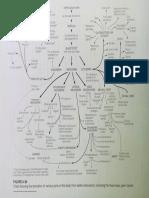 Chart of Germ Layer Derivatives