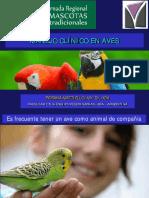 Examen_clinico en Aves