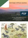 Alternative Nutrient Loops in African Savannas - Presentation