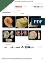 Fósiles - Ammonites - Álbum de Ammonitina - Región de Murcia Digital3.pdf