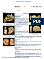 Fósiles - Ammonites - Ammonitina - Región de Murcia Digital.pdf