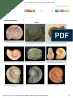 Fósiles - Ammonites - Álbum de Lytoceratida - Región de Murcia Digital.pdf
