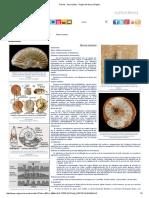 Fósiles - Ammonites - Región de Murcia Digital.pdf