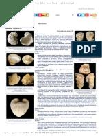 Fósiles - Bivalvos - Bivalvos3.pdf