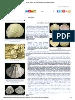 Fósiles - Bivalvos - Bivalvos2.pdf