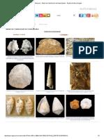 Fósiles - Moluscos - Álbum de Clasificación de Gasterópodos - Región de Murcia Digital.pdf
