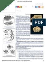 Fósiles - Moluscos - Bivalvos - Región de Murcia Digital.pdf