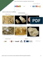 Fósiles - Moluscos - Álbum de Clasificación de Gasterópodos - Región de Murcia Digital3.pdf