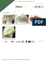 Fósiles - Otros Cefalópodos - Álbum de Aptychus - Región de Murcia Digital.pdf