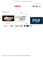 Fósiles - Otros Cefalópodos - Álbum de Belemnites - Región de Murcia Digital2.pdf