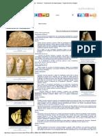 Fósiles - Moluscos - Clasificación de Gasterópodos - Región de Murcia Digital.pdf