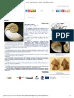 Fósiles - Otros Cefalópodos - Nautilus - Región de Murcia Digital.pdf