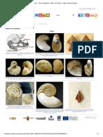 Fósiles - Otros Cefalópodos - Álbum de Nautilus - Región de Murcia Digital.pdf