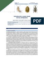 Introducción y guía visual  de los artrópodos