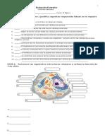 Evaluación Formativa 8º.doc