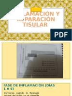 Inflamamcion y Repacion Tisular