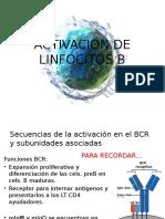 Activacion de Linfocitos b y Nk