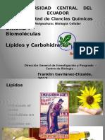 3.1. Biomoléculas Lípidos y Carbohidratos (1)
